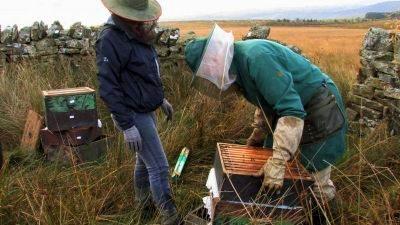 Kde bzučí včely