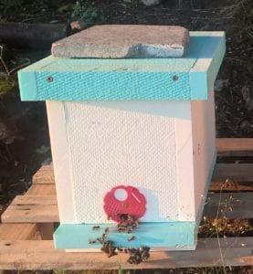 prodej včelstev