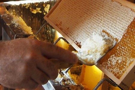 Odvíčkování lipový med