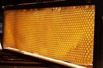 Rámeček s pláství panenského medu