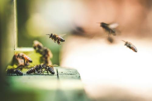 Podzimní prolet včel