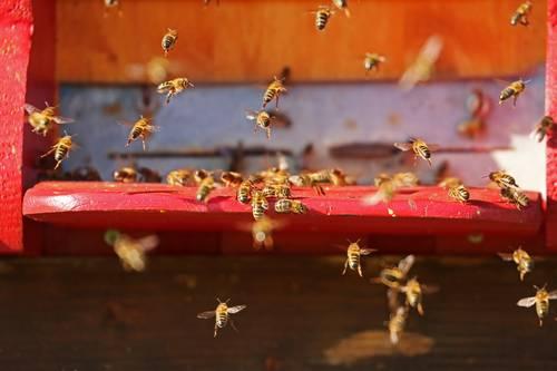 Včelařský svátek – první prolet včel je tu!