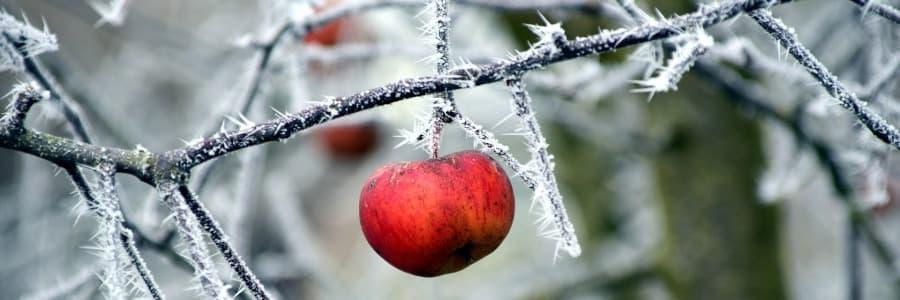 Stromky do chladných oblastí
