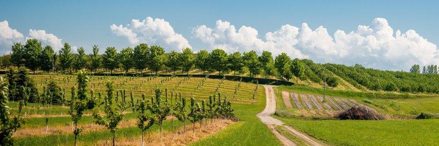 Prodej ovocných stromků a ovocné stromky a keře