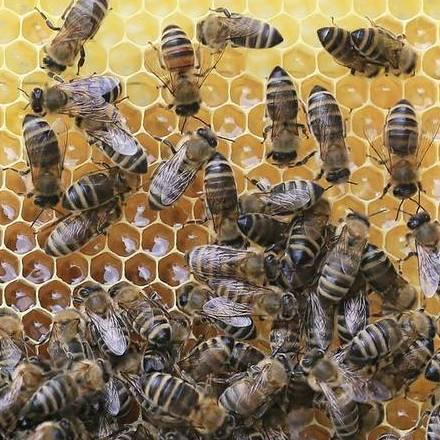 8 benefitů pro raw med v našem zdraví