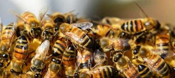 Včelařství prodej medu a svíček z včelího vosku